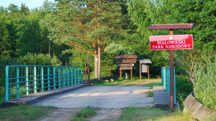 Jest nowy dyrektor Białowieskiego Parku Narodowego. Wśród priorytetów żubr i jego promocja